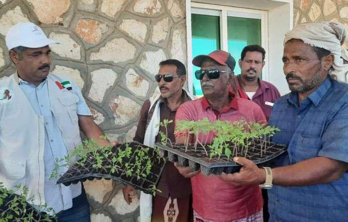 خليفة الإنسانية توزع 10 آلاف شتلة زراعية في سقطرى
